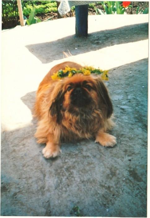 Мой пес - зовут Бастинда