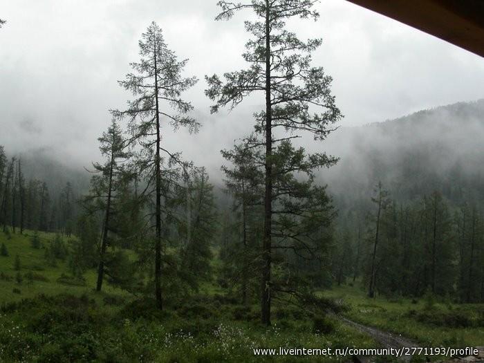 Тайга из окна Газели и дождь, дождь, дождь...