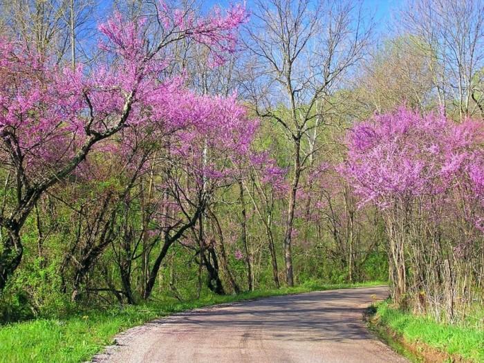 Весна без конца и без краю... 1275151_16