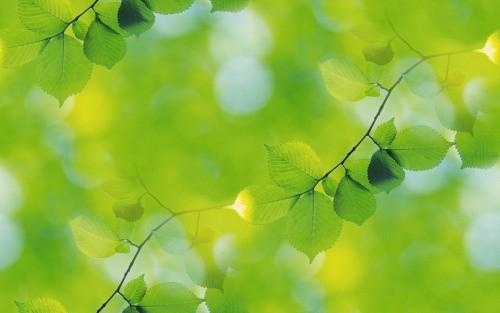 Весна идет! - Страница 12 1302403_short_green_wall