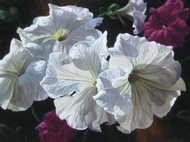 White Petunias with Violet