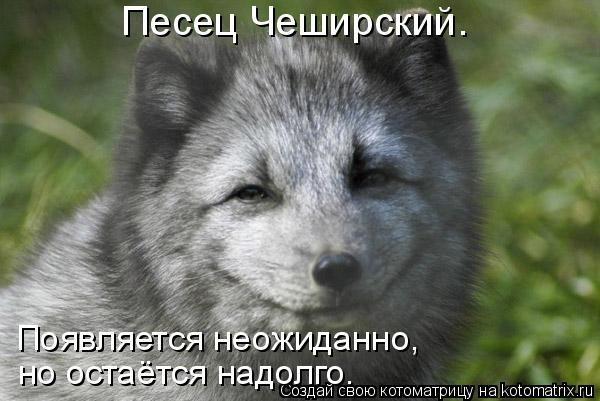 В оккупированном Крыму школьникам отменили льготный проезд - Цензор.НЕТ 8904