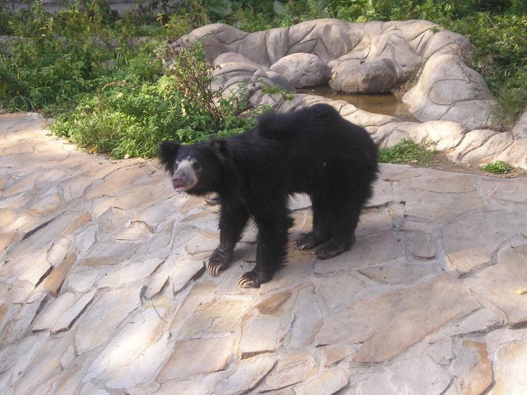 Смешной медведь.
