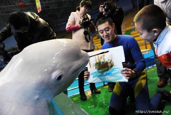 дельфин рисует