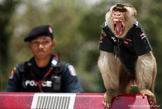 обезьяна полицейский
