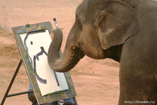 животные художники