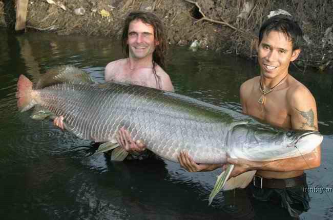 Рыбалка в Таиланде (39 фото)