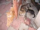 Посмотреть все фотографии серии Кошки не похожи на людей