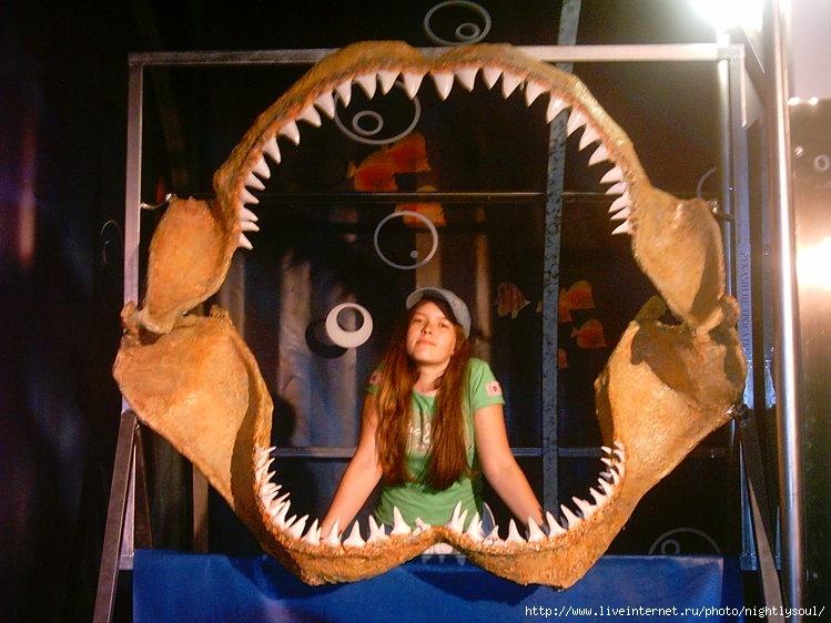 я в зубах у акулы.
