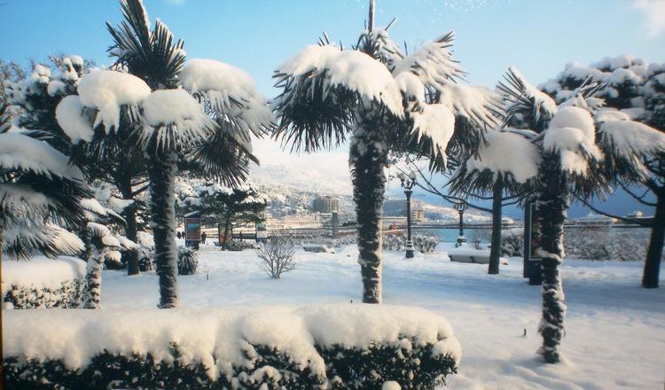 Пальма В Снегу Скачать Торрент - фото 5