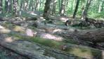 [+] Увеличить - Арестованный лес