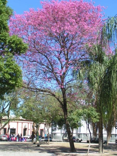 деревья фото и названия