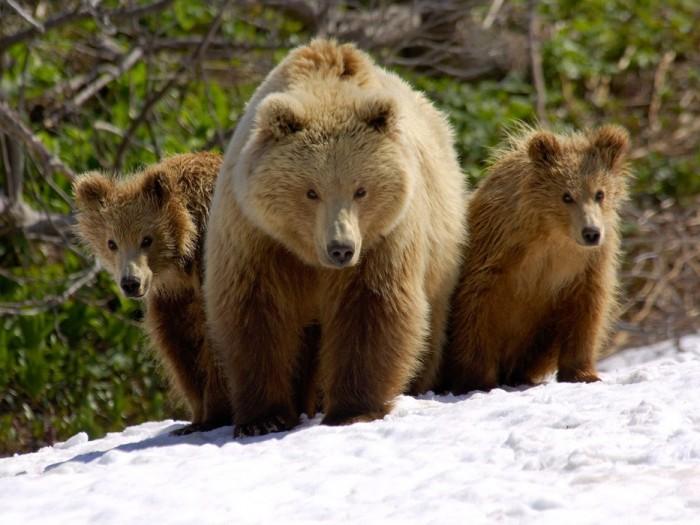 Наши медведики 1458853_143