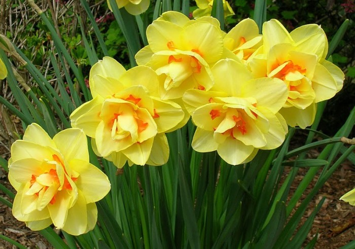 Весна идёт-весне дорогу! 80548