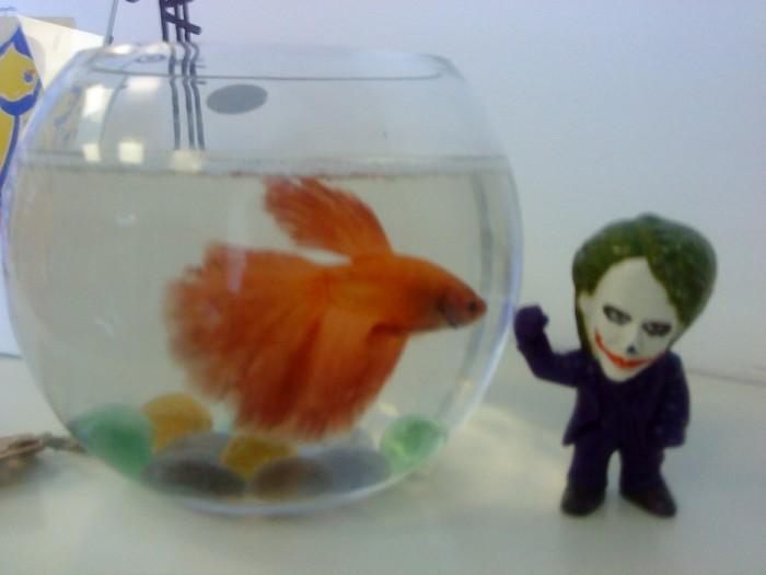 Joker-6 с Рыбкой