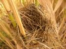 [+] Увеличить - гнездо:)