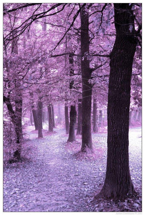 """Розовый"" лес F_18207461"