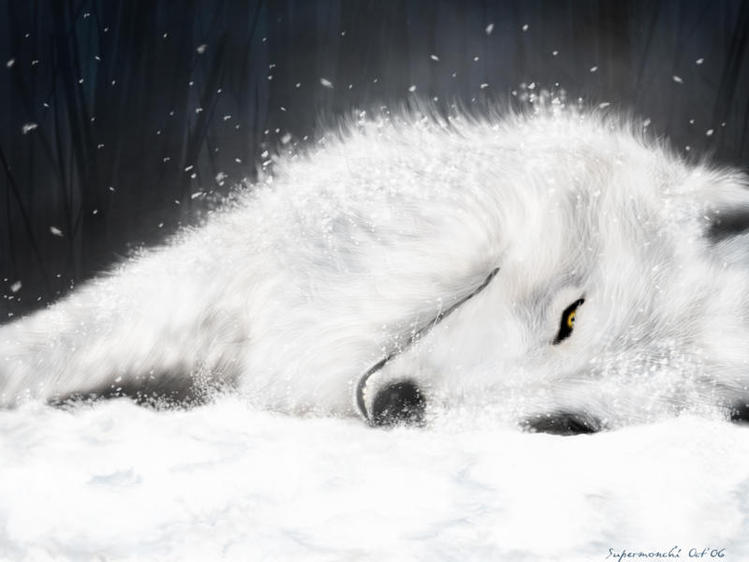 волк, белоснежная шубка, снег, зима.