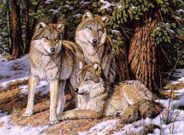 скачать схему вышивки волков