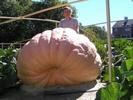 Посмотреть все фотографии серии Огромные овощи