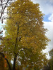 Посмотреть все фотографии серии И снова золотая осень