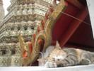���������� ��� ���������� ����� Hi my Thai