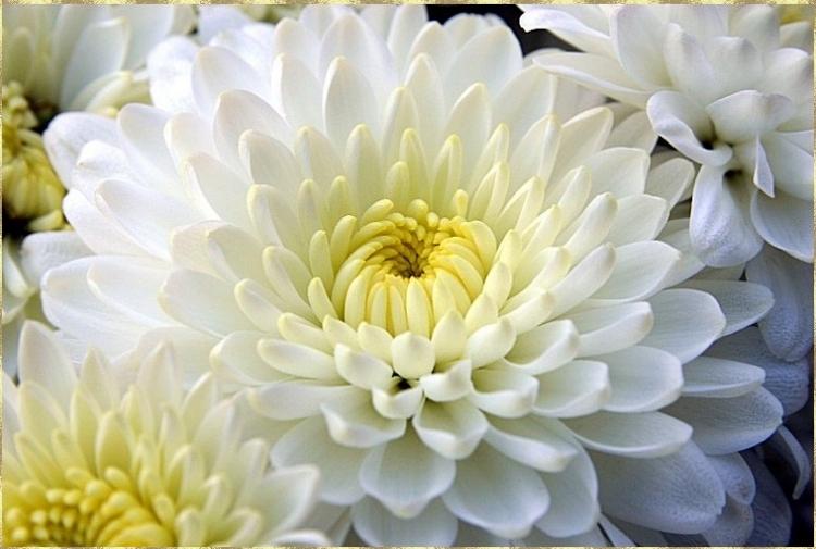 Image result for фото творите с цветами