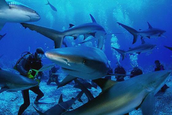 Фотографии, сделанные дайвером RobynJChan в Большой Голубой дыре и в...
