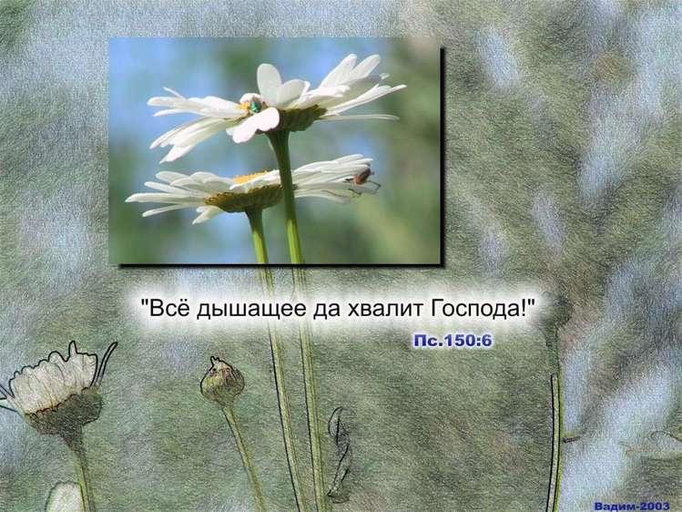 http://img1.liveinternet.ru/images/foto/b/3/250/2553250/f_15989425.jpg