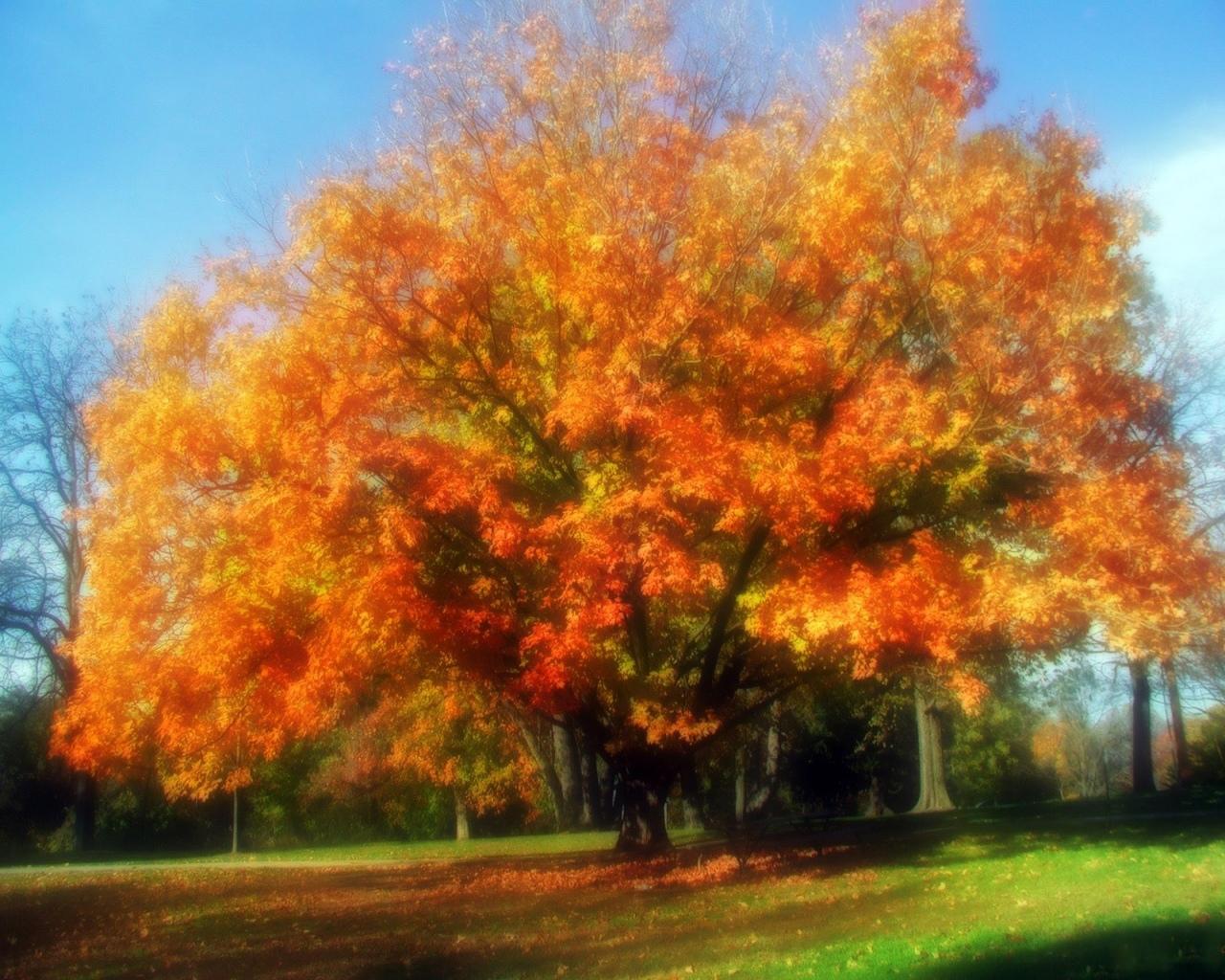 Обои тропа, грусть, Девочка, ноябрь, осень, настроение, серость. Природа foto 14