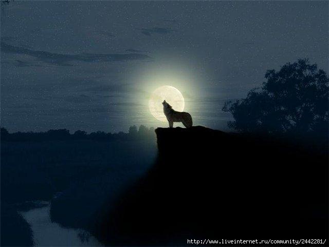 Картинки волчицы одинокой