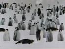 """Посмотреть все фотографии серии Стивен Блум """"Дикий мир"""""""