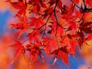 [+] Увеличить - Листья.