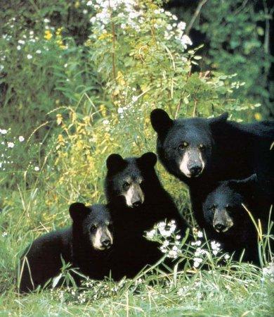 Re: 13 медведей, марихуана и 38 дублей.
