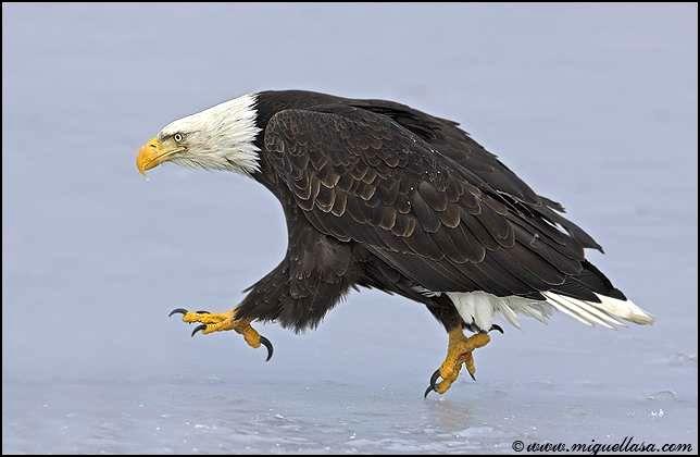 Красивые фото птиц в движении (13 фото) Птицы очень грациозные создание...
