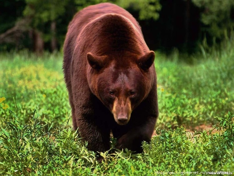 Наши медведики F_15259981