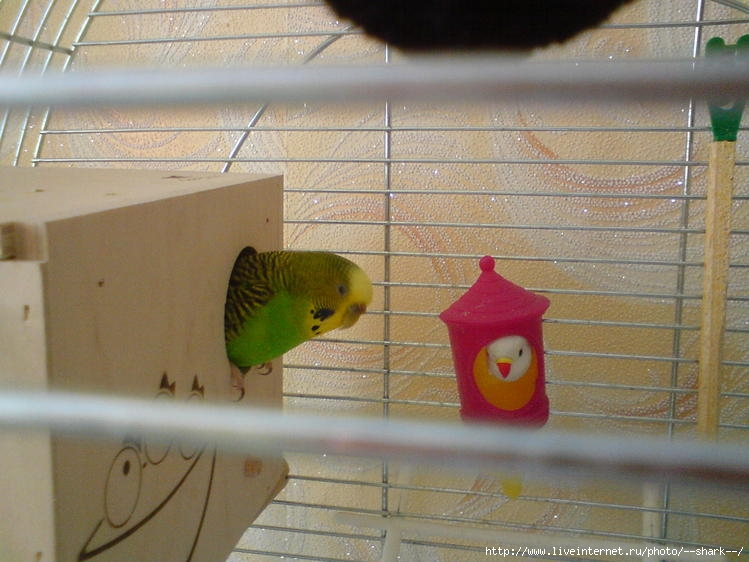 Домик для яиц попугаев своими руками 58