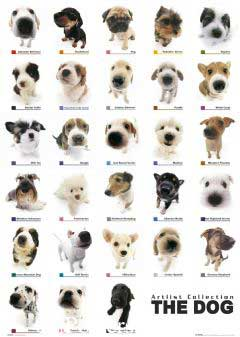 Журнал dog collection - - Сайт книги.