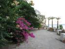 Посмотреть все фотографии серии Египет, Таба, отель Тобья