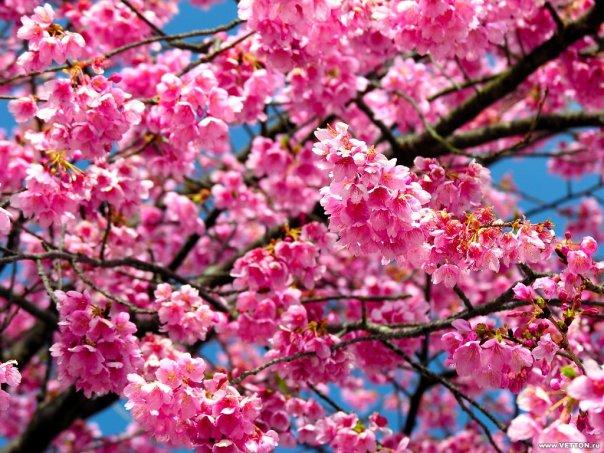 доставка цветов санкт-петербург лилии быстро качественно