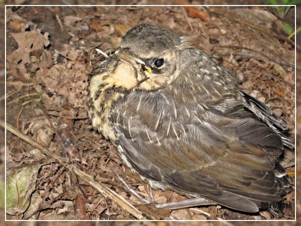 terilans Фото/птицы.