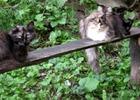 Посмотреть все фотографии серии Мои коты