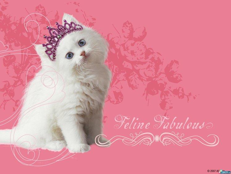 Кошка в вашем доме)