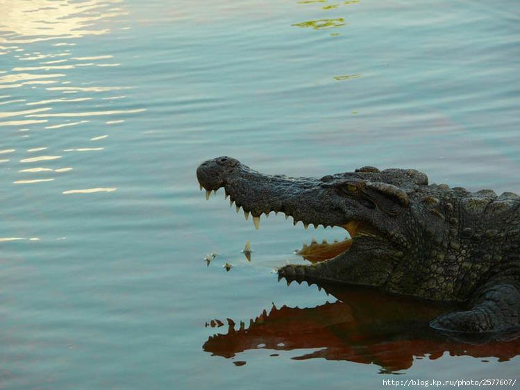 Фотоальбом Катя_Дизайнер_Иванова/Крокодилы.  Вьетнам.