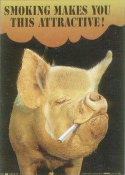 Свині курять цигарки.