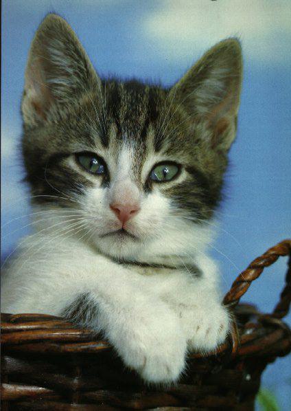 кошки мира фото - фотография 3.