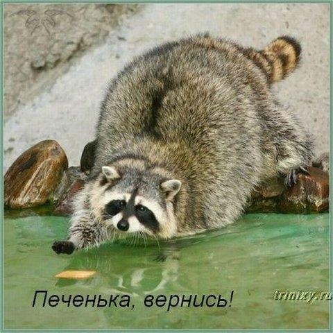 http://img1.liveinternet.ru/images/foto/b/3/633/3256633/f_18087067.jpg