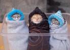 Посмотреть все фотографии серии мои кошки