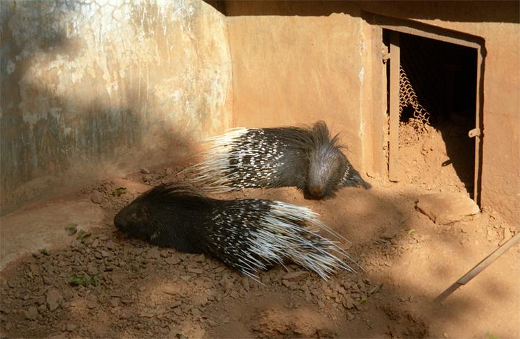 В зоопарке Нанданаканан