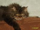 Посмотреть все фотографии серии мои кошечки